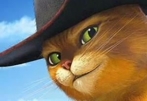 4-gatto-multidimensionale